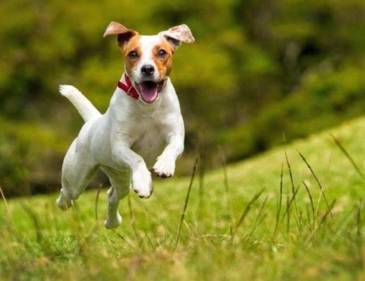 Выбор клички для собаки