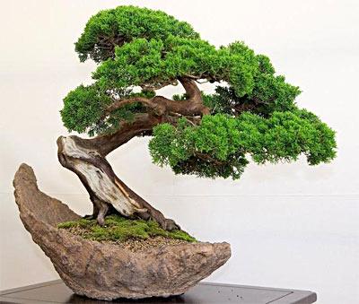 Декоративное дерево бонсай своими руками